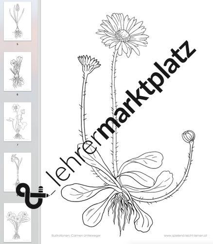 ausmalbilder frühlingsblumen a4  unterrichtsmaterial im